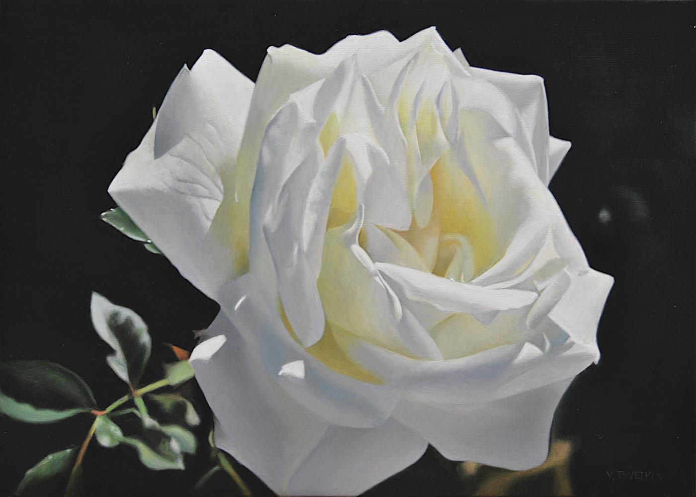 Бяла роза