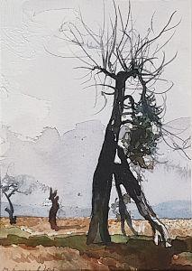 Дърво край Каранци