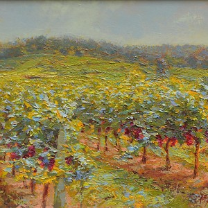 Vineyards at noon